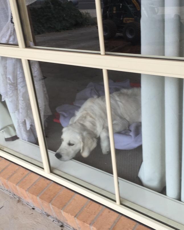 The doggie in tne window